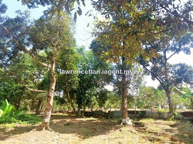 Mantin Durian Orchard Land, Mantin