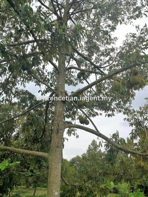 Durian Orchard Land, Johor, Gerisek