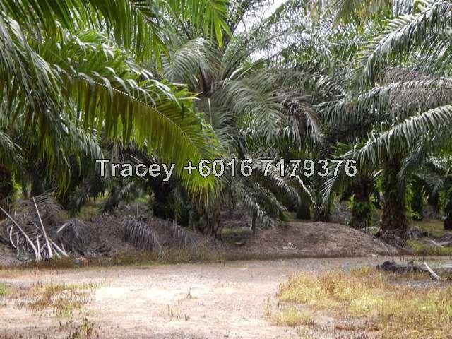 Ayer Hitam - 7.5 Acres Oil Palm Land for Sale, Ayer Hitam