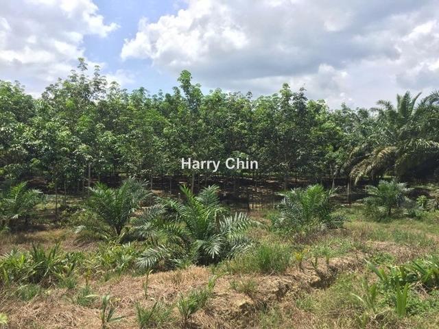 13 acres Agri land,Karak,Pahang, Karak