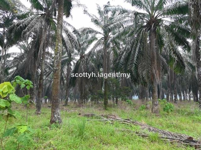 Industry Land Broga Semenyih Kajang Pajam, Kampung Sri Broga, Lenggeng
