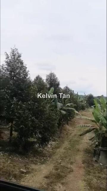 Durian land, Yong Peng