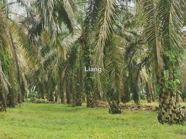 Kota Tinggi - Ulu Tiram land for sales, Johor Bahru