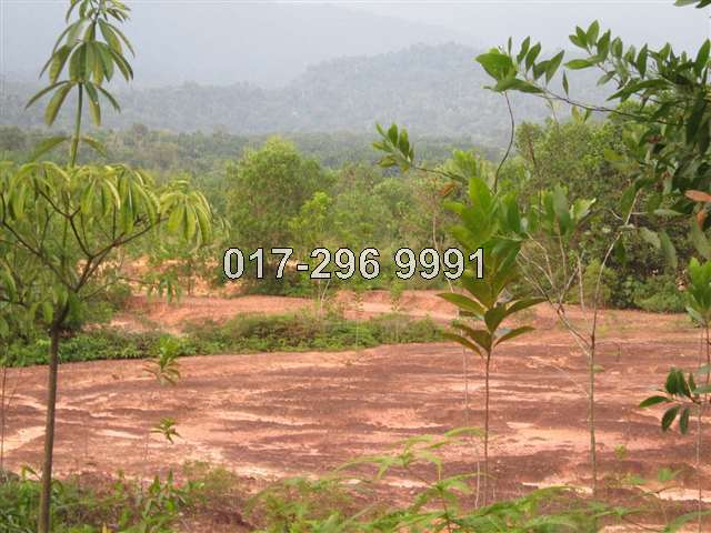 2 Adjoining Parcels Of Vacant Land @ Batang Kali